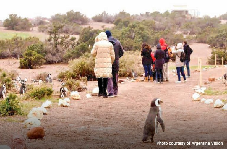Excursion-Punta-Tombo--Magellanic-Penguins-01-min