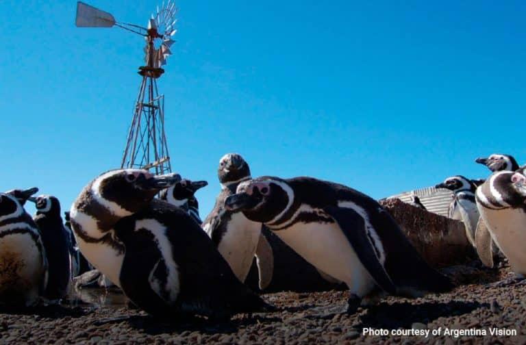Excursion-Punta-Tombo--Magellanic-Penguins-02-min