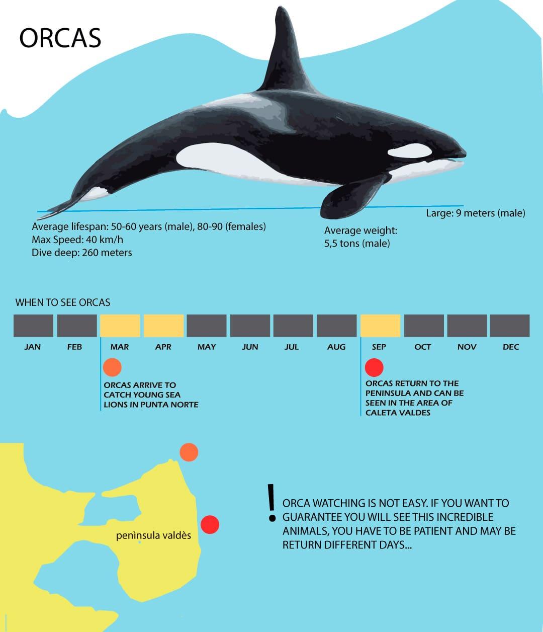killer whale best season infography