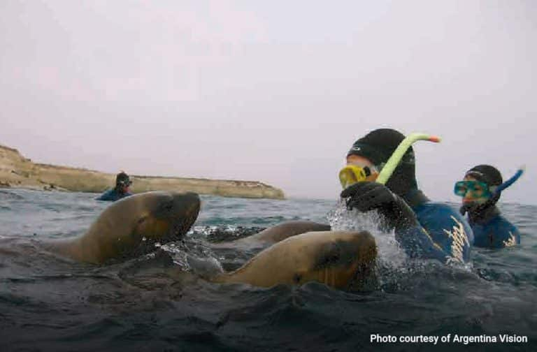 Snorkelling-with-Sea-Lions-in-Puerto-Madryn-02-min