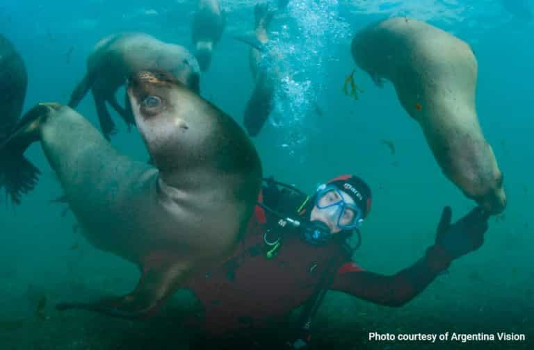 diving-with-sea-lions-in-puerto-madryn-01