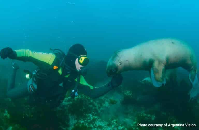 diving-with-sea-lions-in-puerto-madryn-02