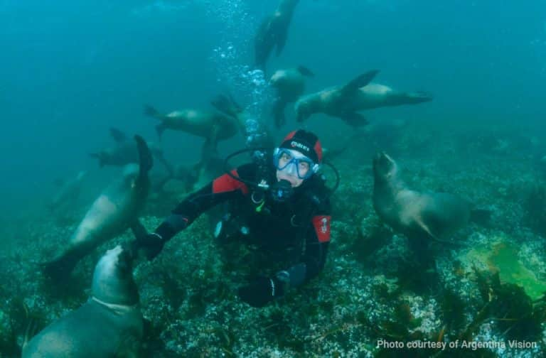 diving-with-sea-lions-in-puerto-madryn-03