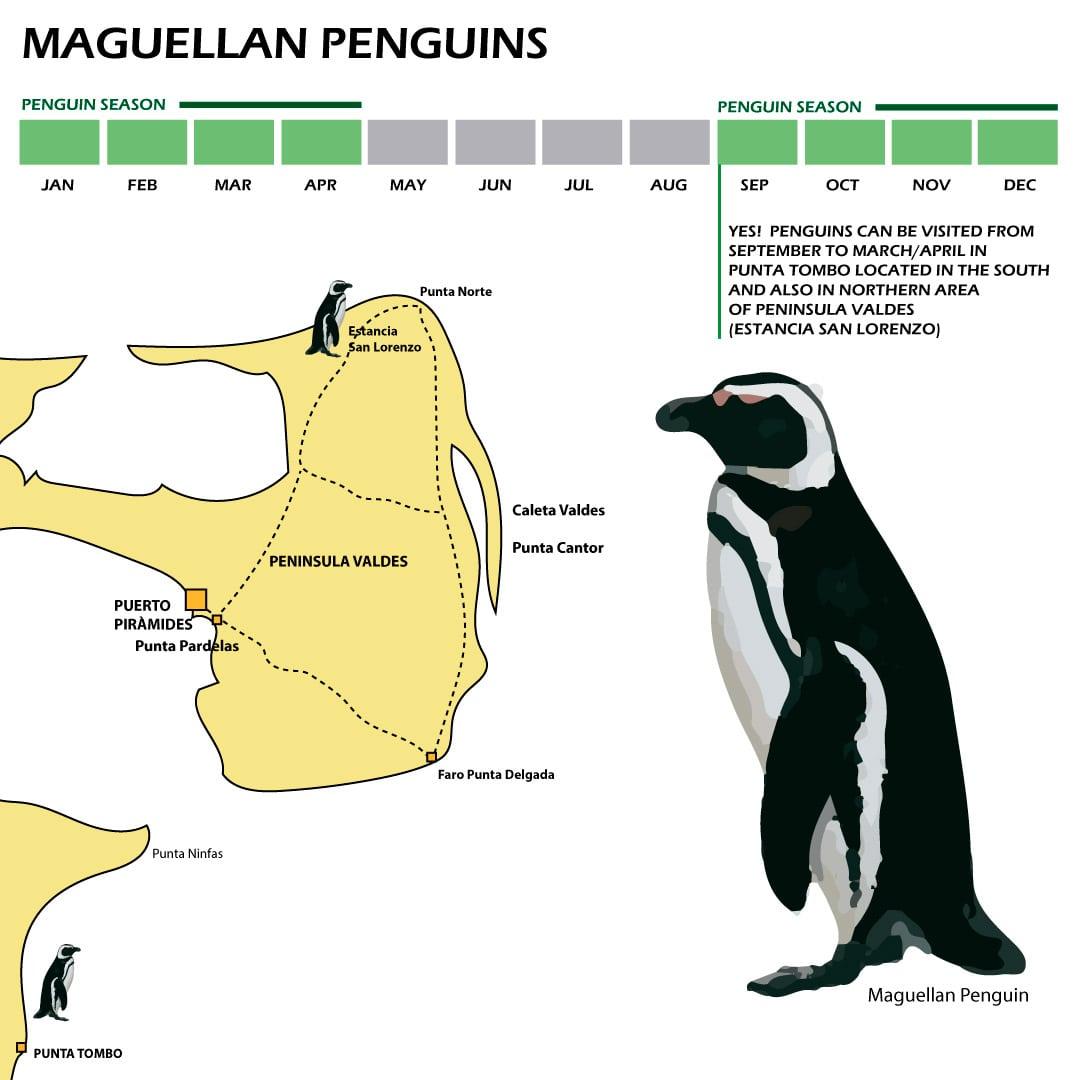 Maguellan Penguins beast season infography