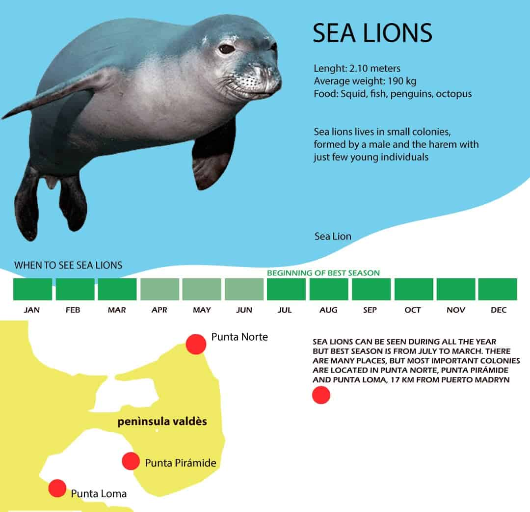 sea lions infography best season