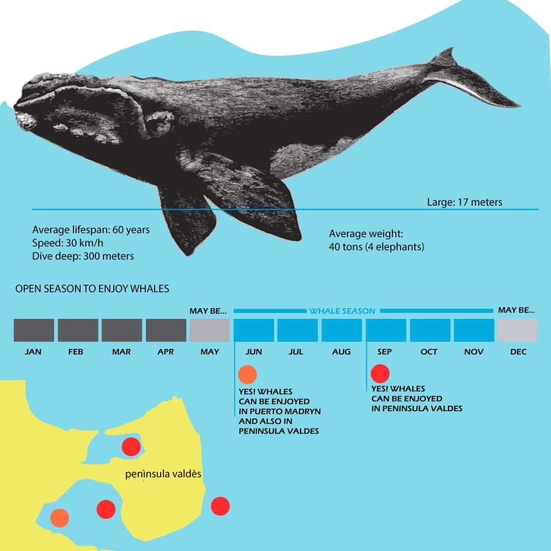 whale infography best season