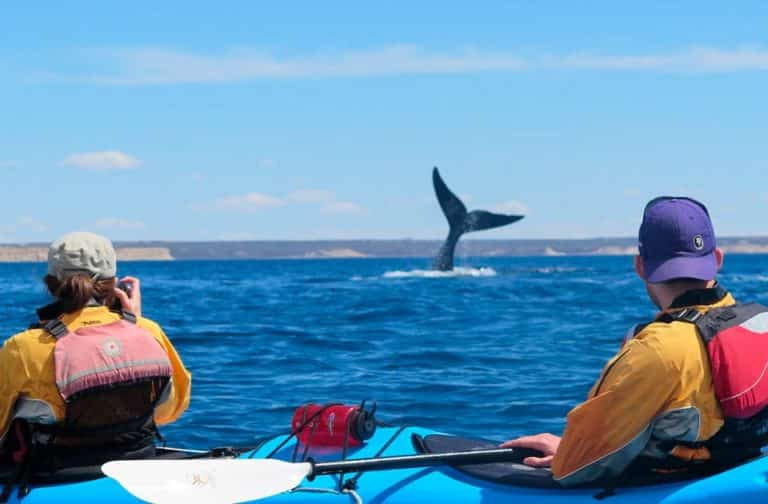 Discover-kayaking-puerto-madryn-gallery-03-min